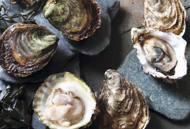 5 festivales en Baja California que ningún foodie se puede perder este 2020 - festival-de-las-conchas-y-vino-nuevo