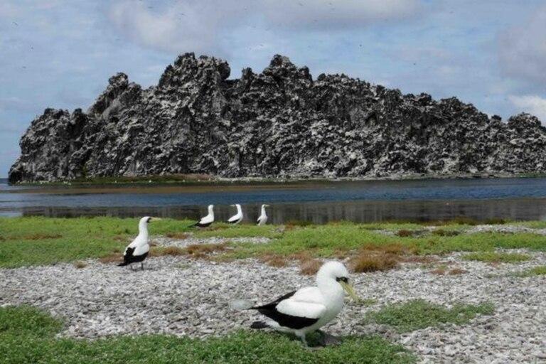 La roca volcánica de la Isla de Clipperton está atravesada por cuevas y pasadizos. Foto tomada en 2016 por el investigador Enrique Ballesteros.