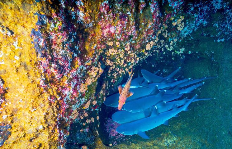 Un paraíso para los amantes del buceo